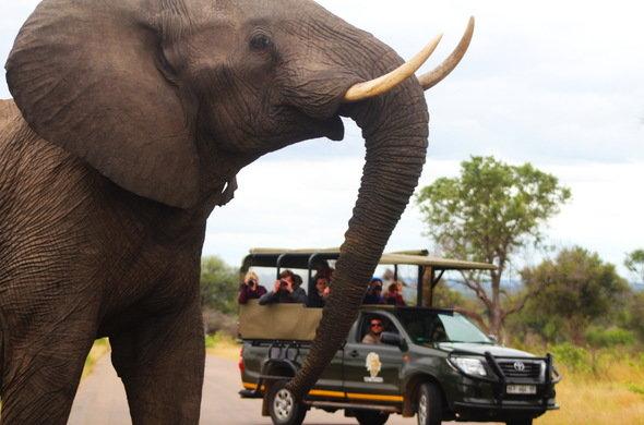 África do Sul com Kruger Park e Stellenbosch